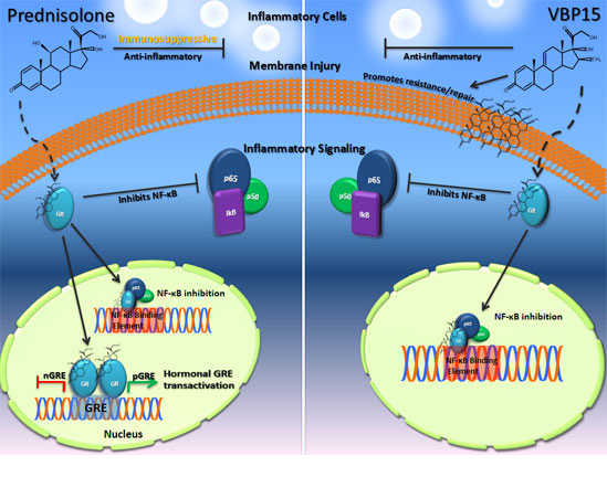 transrepression steroids
